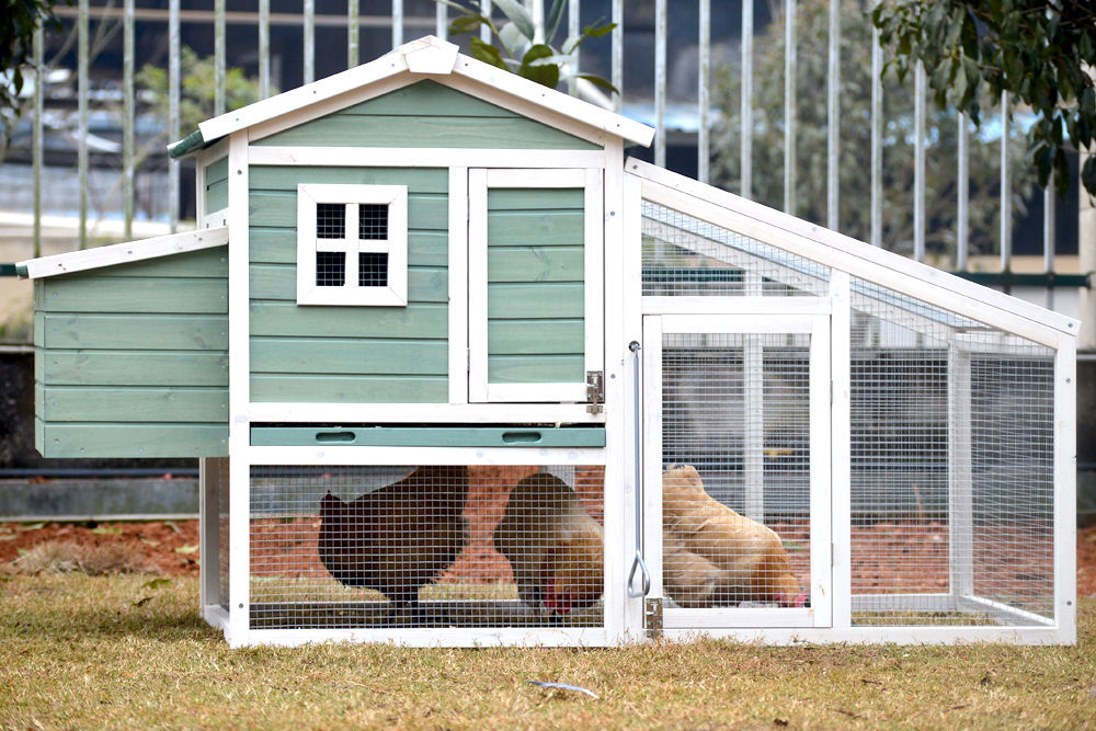Chicken coop - Research into keeping Chickens