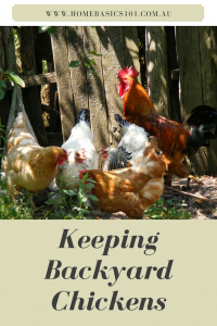 Keeping Chickens; My First 6 Months