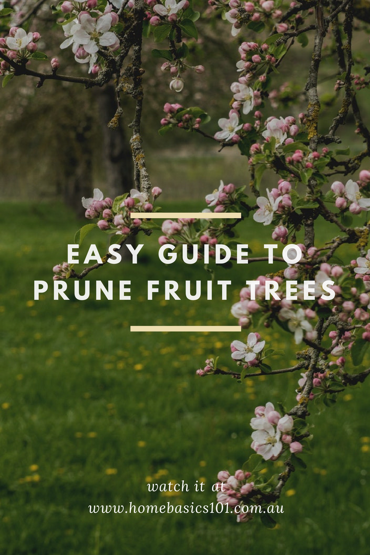 Easy Guide to Pruning Fruit Trees