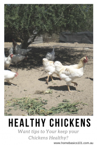 Chicken Health