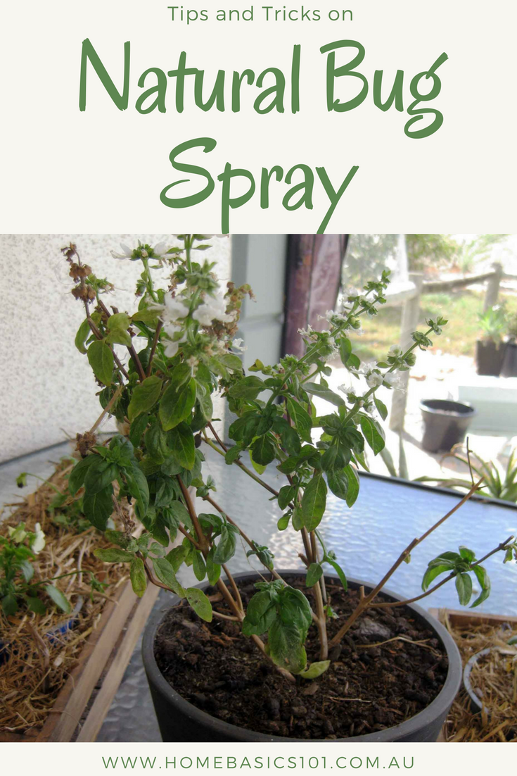 Utilising Natural Bug Sprays around your Home can help keep the bugs outside rather than them setting up residents inside