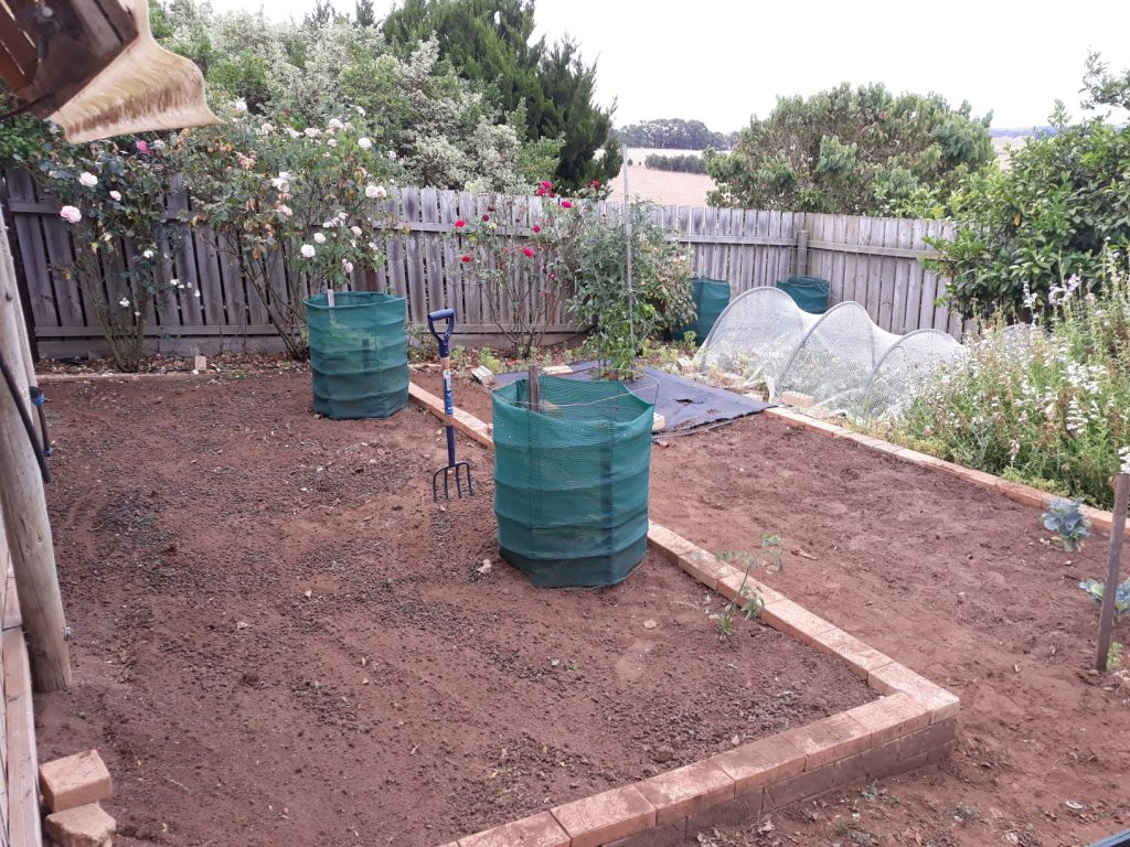 Veggie patch after photo