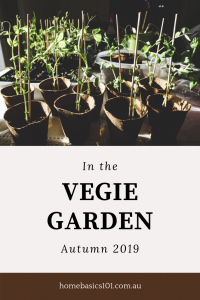 In the Vegie Patch – Autumn 2019