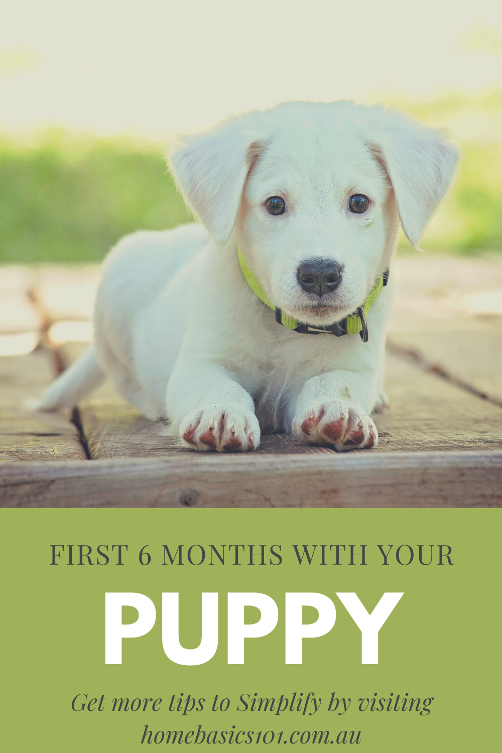 Tips on First 6 Months with your Puppy