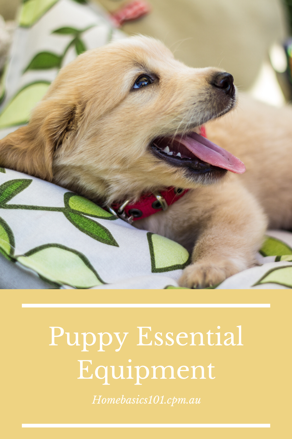 Learn the only Equipment you need for your puppy