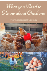 Tips on Keeping Chickens