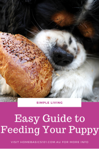 Food Guide For Puppies