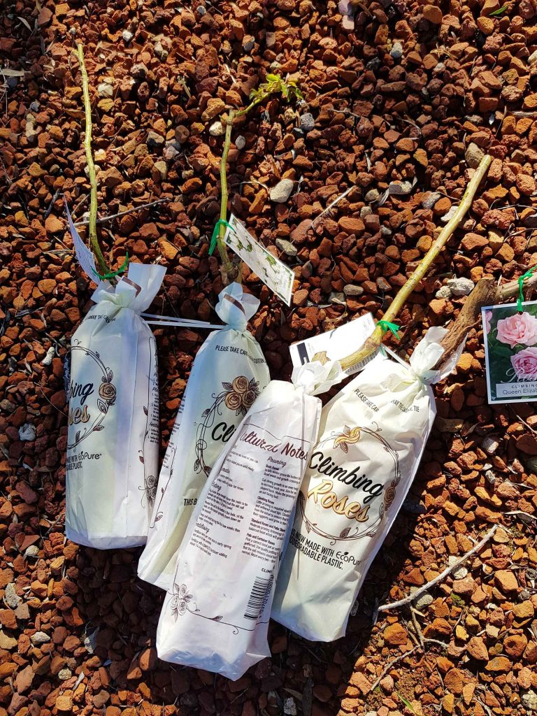 Simple tips to planting and growing bare-rooted plants